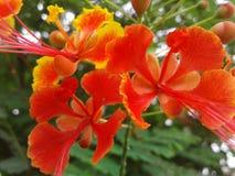 Een aardige bloem royalty-vrije stock foto's
