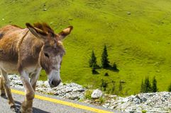 Een aardige ezel op de weg royalty-vrije stock foto