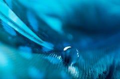 Een abstract beeld van blauwe kleuren pluizige veren met één macrodaling van het dauwwater, mooie natuurlijke achtergrond Royalty-vrije Stock Afbeeldingen