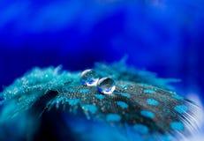 Een abstract beeld van blauwe kleuren pluizige veren met twee de macrodaling van de waterdauw, mooie natuurlijke achtergrond Stock Foto's