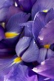 De Samenvatting van de Bloemblaadjes van de iris stock foto
