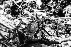 Een abstract zwart-wit patroon van boom vertakt zich Royalty-vrije Stock Foto