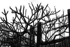 Een abstract zwart-wit patroon van boomtakken en het ijzer schermen Royalty-vrije Stock Afbeelding