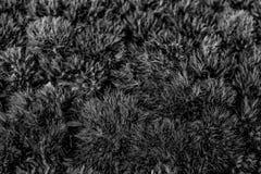 Een abstract zwart-wit patroon van zachte textuur Stock Foto