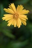 Een abstracte foto van een bloem Stock Afbeelding