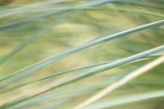 Een abstracte natuurlijke achtergrond van grassen royalty-vrije stock fotografie