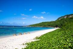 Een afgezonderd zandig die strand met groen wordt behandeld Stock Afbeeldingen