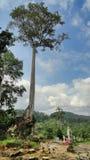 Een Afrikaanse boom in het bos royalty-vrije stock foto
