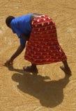 Een Afrikaanse vrouw spreidt te drogen rijst uit Royalty-vrije Stock Afbeeldingen