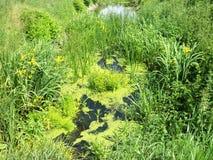 Een afvoerkanaal in de lente na een regenachtige periode stock afbeeldingen