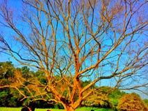 Een alleen boom stock foto's