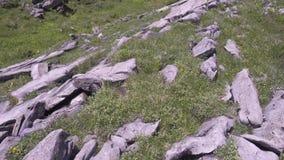 Een alpiene weide met vele rotsen stock videobeelden