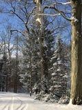 Een andere mooie sneeuwdag Royalty-vrije Stock Afbeeldingen