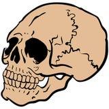 Een andere schedel Stock Fotografie