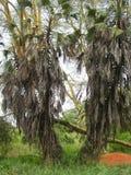 Een andere variatie van palmen royalty-vrije stock fotografie