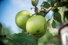 Een appel Royalty-vrije Stock Fotografie