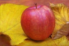 Een appel op gele de herfstbladeren Royalty-vrije Stock Foto