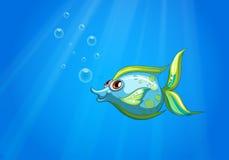 Een aqua mariene vis Stock Afbeelding