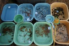 Een aquariumvis voor verkoop in Markt Stock Afbeelding