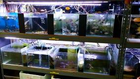 Een aquariumwinkel in Hong Kong stock videobeelden