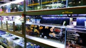 Een aquariumwinkel in Hong Kong stock video