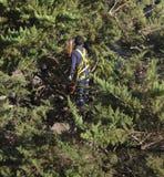 Pruner op het werk aangaande een boom Stock Foto