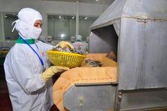 Een arbeider zet garnalen in een bevroren machine in een verwerkingsinstallatie in Hau Giang, een provincie in de Mekong delta va Stock Foto's
