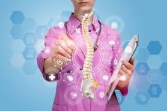 Een arts die met een kunstmatig stekelmodel werken royalty-vrije stock foto's