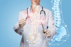Een arts die met kunstmatig stekelmodel werken met medische hulpmiddelen stock fotografie
