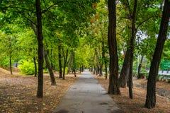 Een asfaltsteeg in het groene park stock afbeeldingen