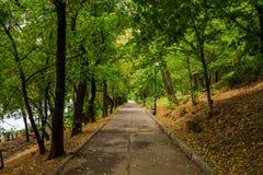 Een asfaltsteeg in het groene park royalty-vrije stock fotografie