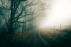 Een atmosferische mistige de wintersdag met een weg na de rand van bos, met desaturated humeurig geeft uit stock foto