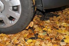 Een autoband in de herfst Stock Foto