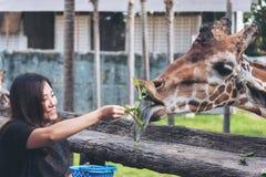 Een Aziatische vrouw die verse groente voeden aan een babygiraf stock foto's