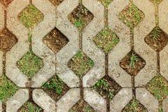 Een bakstenen muurachtergrond op een natuurlijk gras Royalty-vrije Stock Foto
