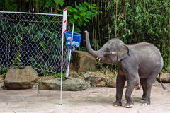 Een bal van het olifantsspel Royalty-vrije Stock Foto