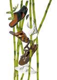 Een bamboe stock fotografie