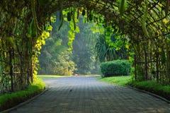 Een bamboetunnel met verschillende soorten het hangen groenten het groeien op het, in een Thais tuinpark royalty-vrije stock fotografie