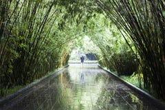 Een Bamboetunnel in een Park stock foto