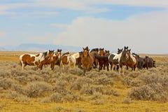 Een band van Wilde Mustangen royalty-vrije stock foto