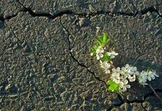 Een barst in het asfalt Hoogste mening stock afbeelding