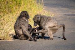 Een bavianenfamilie met zijn baby stock foto