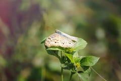 Een beautyful vlinder witte en gele flarden stock afbeeldingen