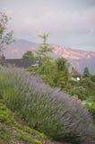 Een bed van Lavendel Royalty-vrije Stock Foto
