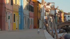 Een bedekte dijk van Italiaanse Burano met kleurrijke gebouwen en een hongerige zeemeeuw stock footage