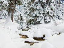 Een beek en pijnboombomen in de winter stock afbeelding
