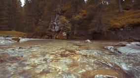 Een beek met stenen daarin stroomt in het midden van de groene bomen van aard stock videobeelden