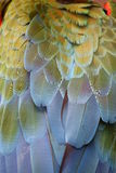 De veren van de ara Stock Afbeelding