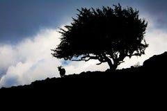 Een beeld van een berggeit naast een boom royalty-vrije stock fotografie