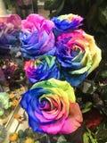 Een Beeld van een bizar boeket van regenboog kleurde rozen stock foto